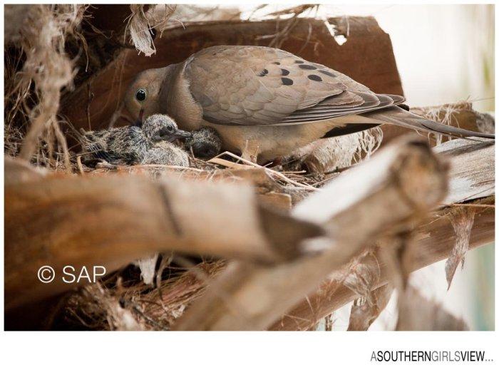 Dove 051213-3228_WEB