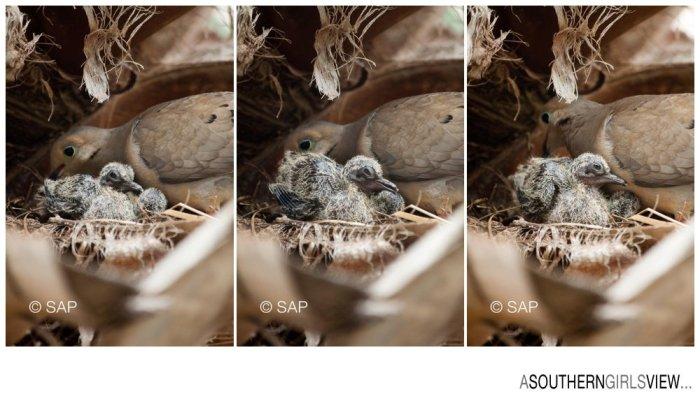Dove 051213-3240_WEB