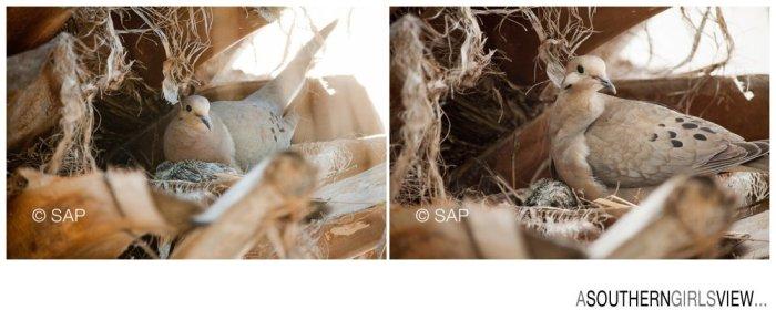 Dove 051213-3299_WEB