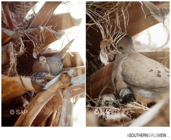 Dove 051213-3328_WEB