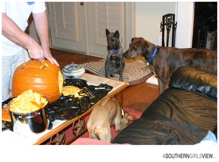 Sandy Adams Photography Halloween Houston Editorial Photographer-6-2