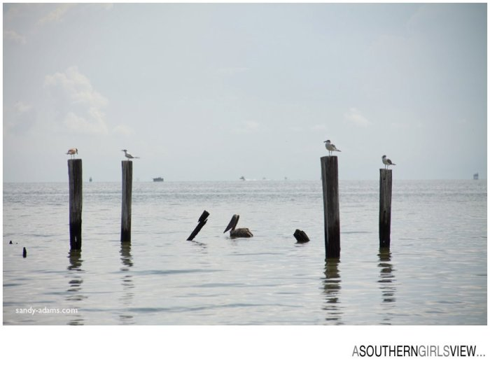 Sandy Adams Photography Wildlife Center Pelican Release Seabrook Nature photographer-3462